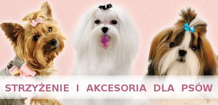 Profesjonalne Strzyżenie Psów Psi Fryzjer Salon Dla Psów